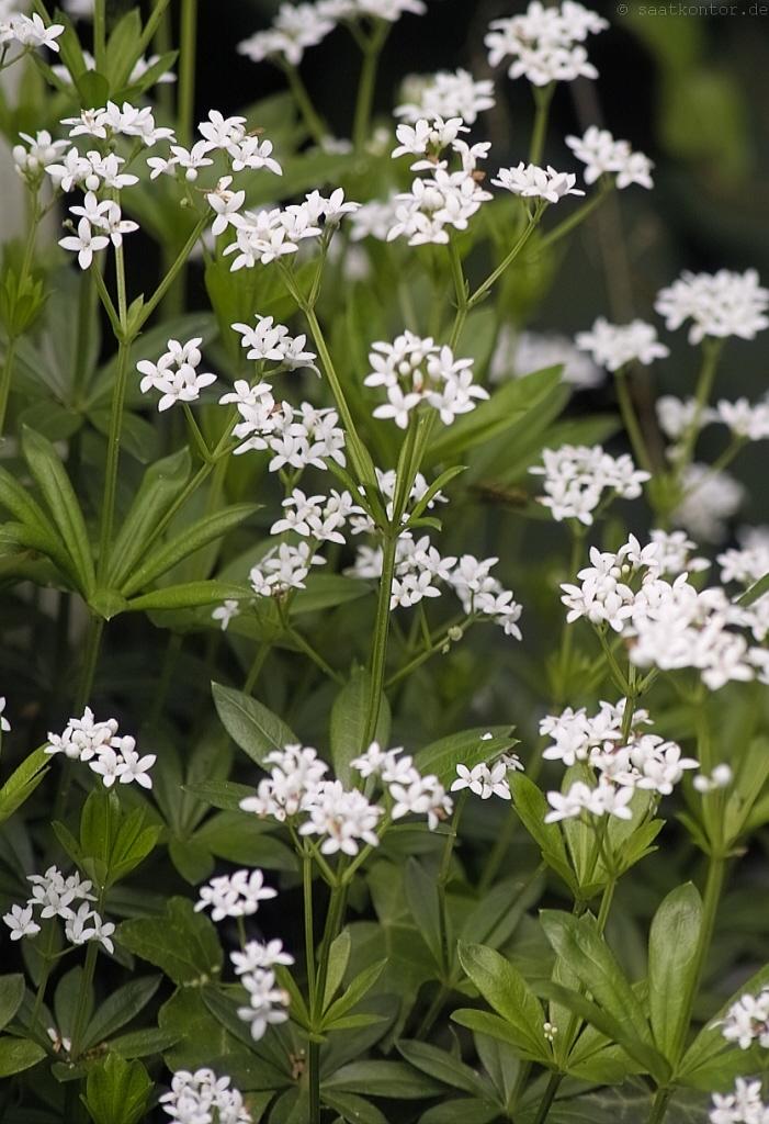 Outflower 50g Garten Bonsai Dekosand//Farbsand Deko Sand Farbige Sand